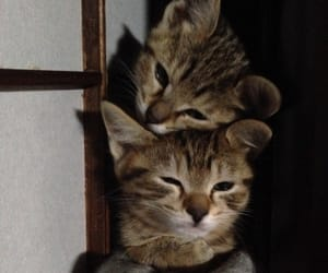 cat and 猫 image