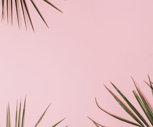 decor, minimal, and palm leaves image
