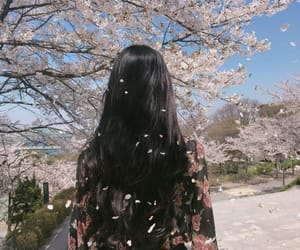 asia, cherry blossoms, and girl image