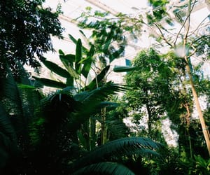 aesthetic, forest, and glasshouse image