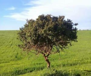 earth, Libya, and olive image