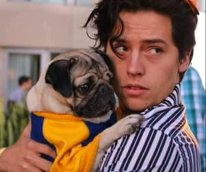 riverdale, cole sprouse, and dog image