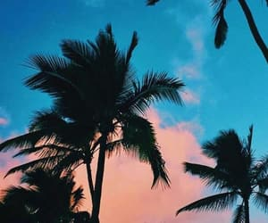 wallpaper, blue, and palm trees image