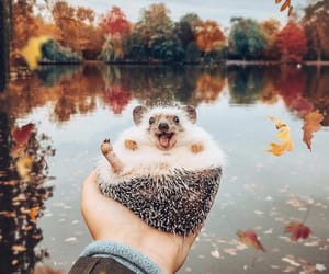 animals, happiness, and lake image