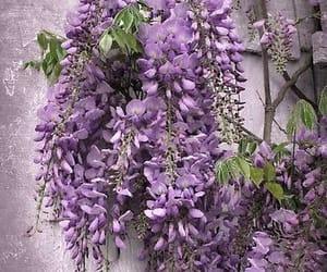 çiçek image
