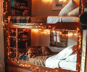 dog, cozy, and autumn image