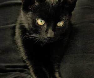 black cat, pretty, and schwarz image