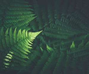 bokeh, ferns, and greenhouse image