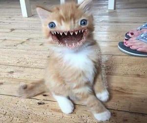 cat, creepy, and wtf image