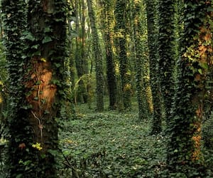 forest, green, and ivy image