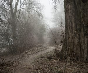 forest, mother nature, and atmospheres image