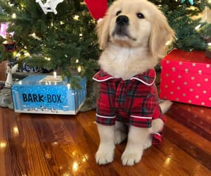 christmas, holiday, and puppy image
