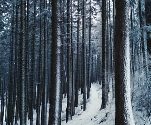 forest, snow, and tree image