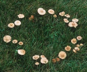 fairy and fairy ring image