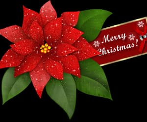 christmas, flowers, and happy holidays image