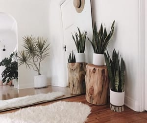 home, plants, and decoration image