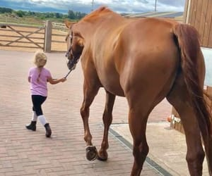 equestrian, horse, and baby image