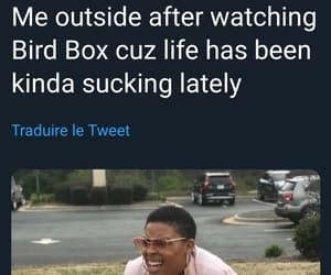 netflix and bird box image