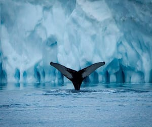 greenland, icebergs, and ocean image