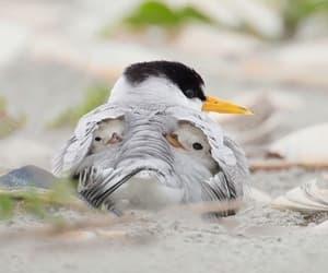 baby animals, birds, and chicks image
