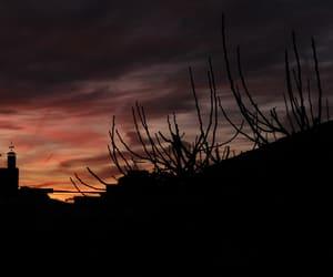 night, sky, and tree image