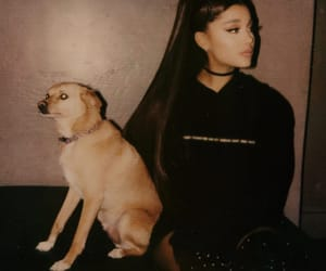 ariana grande, dog, and Toulouse image