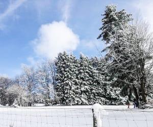 christmas, photography, and cold image