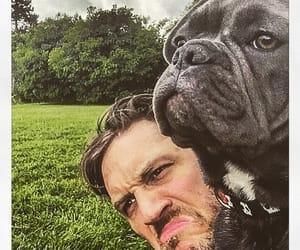 dog, french bulldog, and tom hardy image
