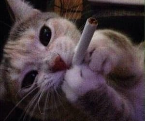 cat, cigarette, and grunge image