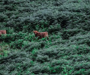 animal, forest, and summer image