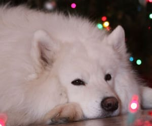 christmas, fluffy, and lights image