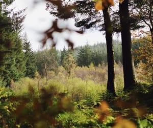 autumn, canon, and fall image