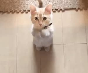 gif and kitten image