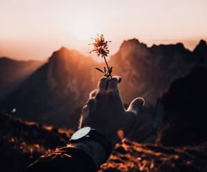 flowers, photography, and mountains image