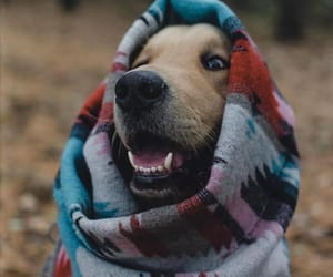 animal, blanket, and adorble image