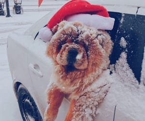 car, dog, and snow image