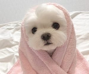 adorable, puppy, and pink towel image