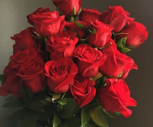 rose, flowers, and red image