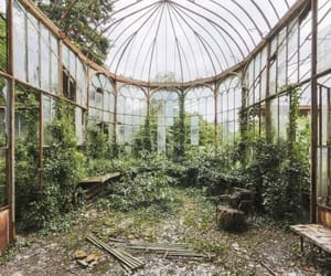 abandoned, green, and greenhouse image