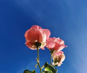 roses and sky image