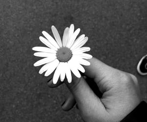 black and white, flower, and white image