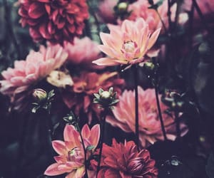 floral wallpaper, ios wallpaper, and ios background image