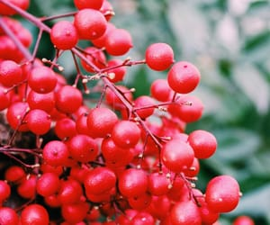 berries, plant, and nature image