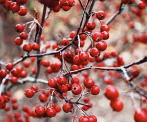berries, nature, and winter image
