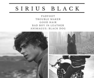black dog, harry potter, and sirius black image