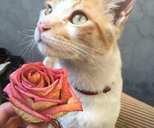 cat, lorenzo, and cute image