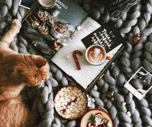 animals, book, and cat image