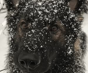 animals, snow, and dogs image