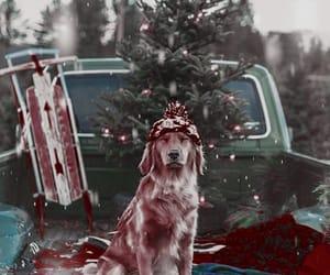 christmas, dog, and winter image