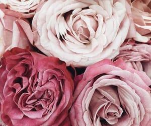 fleur, Fleurs, and pink image